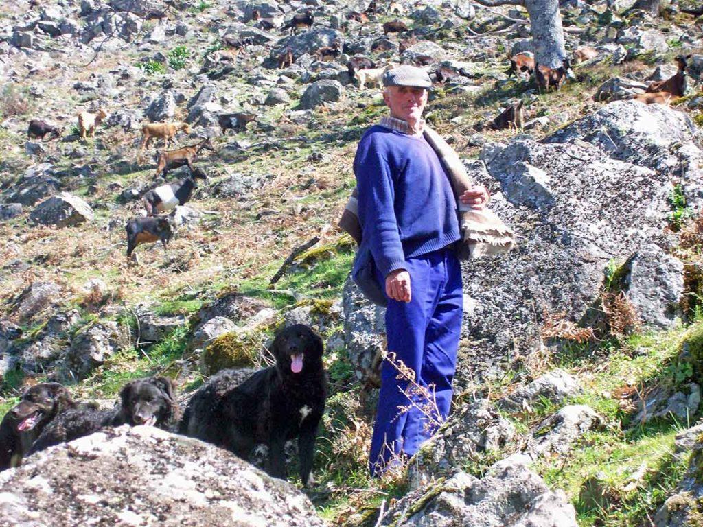 Felipe uno de los últimos cabreros de Segura de Toro. Valle del Ambroz. Cáceres