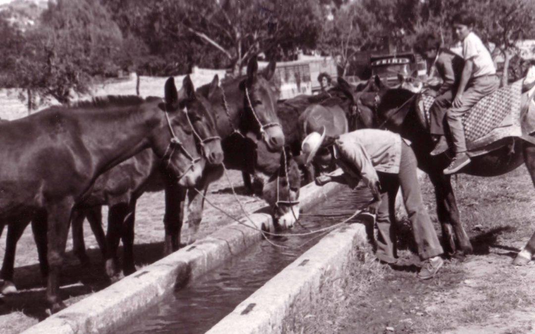 Feria tradicional de ganado en el Recinto Hípico. Cáceres.  28 de Mayo de 2019