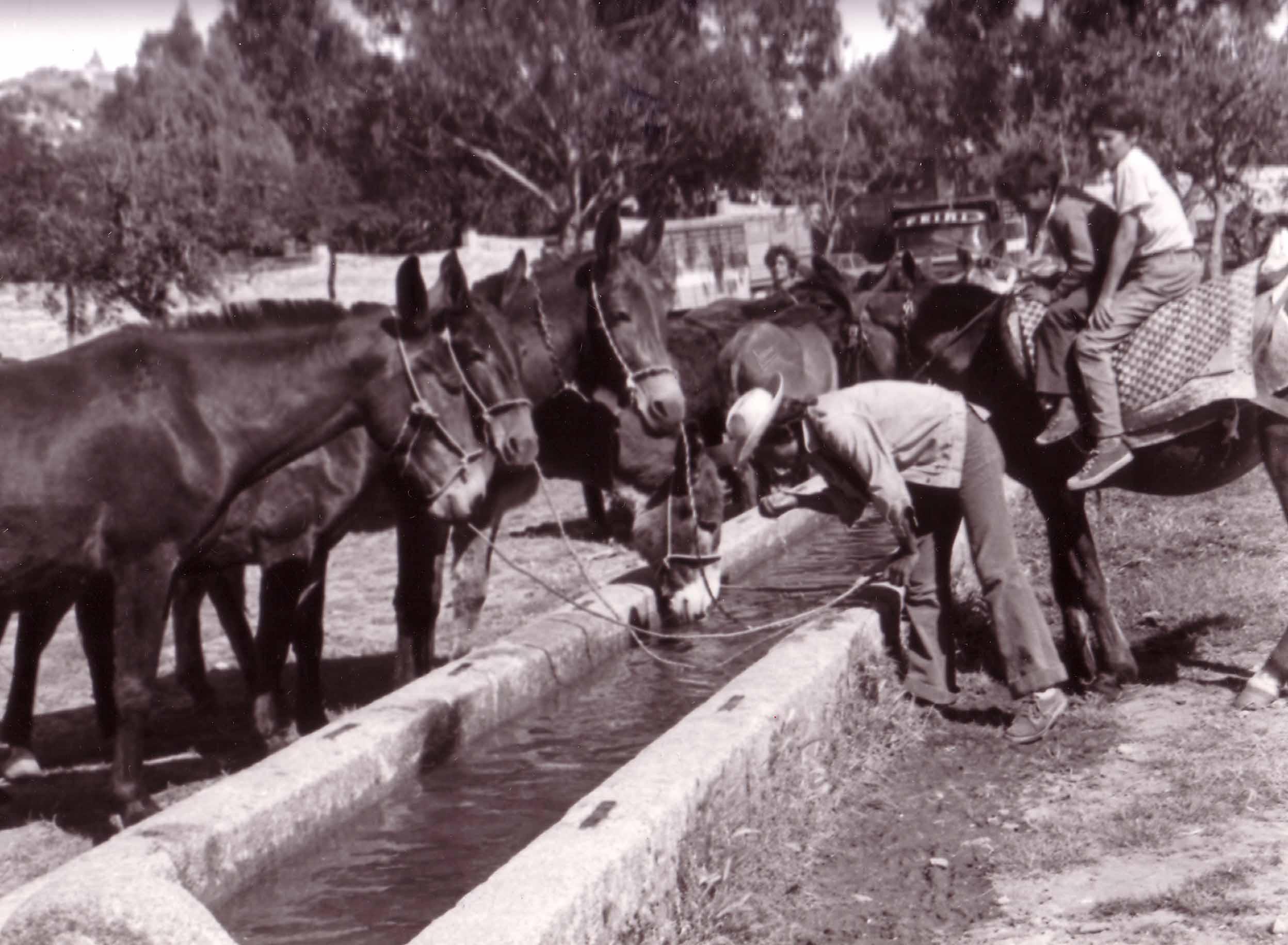 Feria de ganado septiembre de 1969